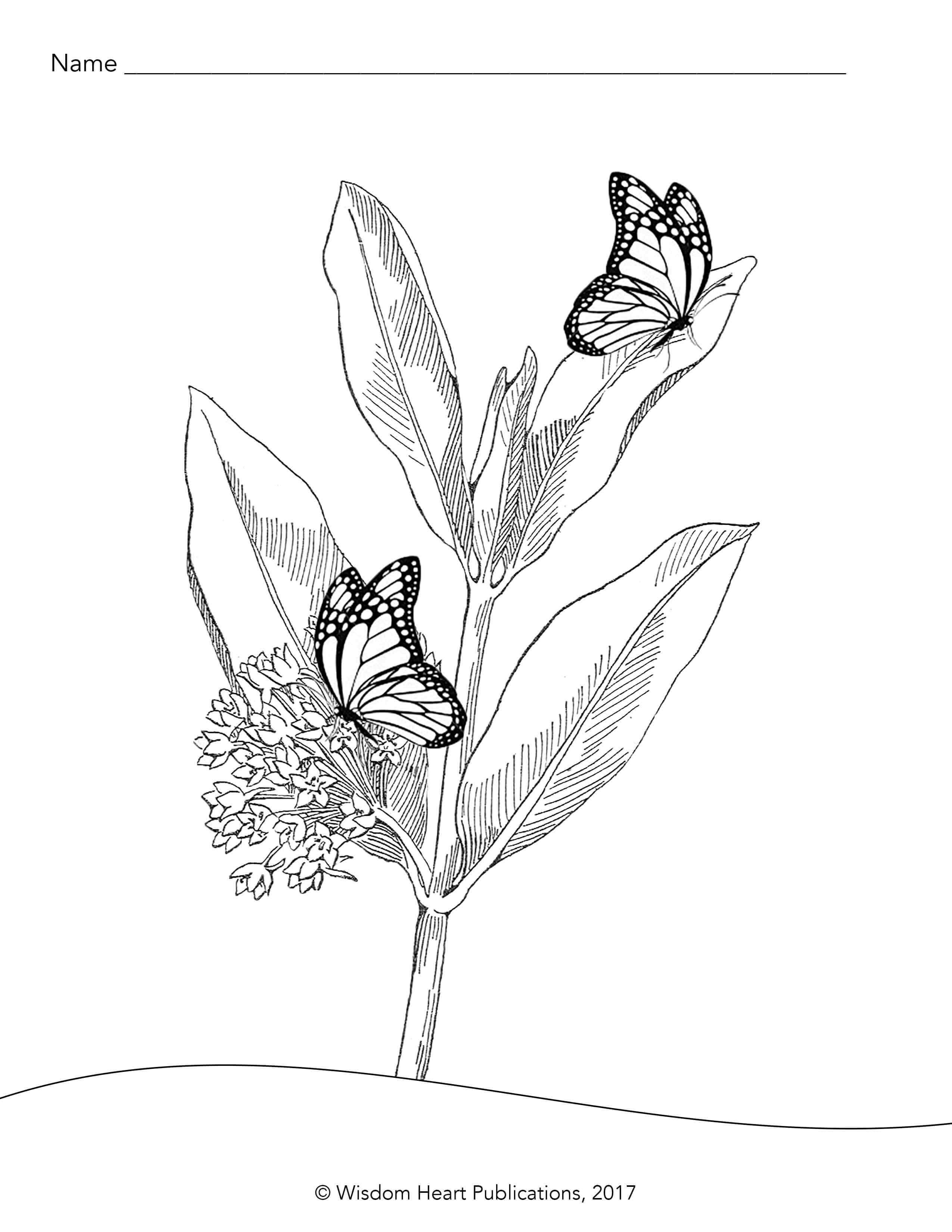 monarch butterfly life cycle coloring page caterpillar to pages